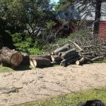 Full Removal of Norway Maple 8
