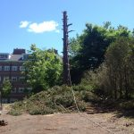 Complete Removal of Large Pine 7