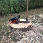 Complete Removal of Large Pine 8