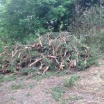 Complete Removal of Large Pine 9