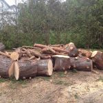 Complete Removal of Large Pine 10
