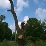 Monster Willow 12