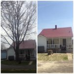 Full removal of Sugar Maple 1
